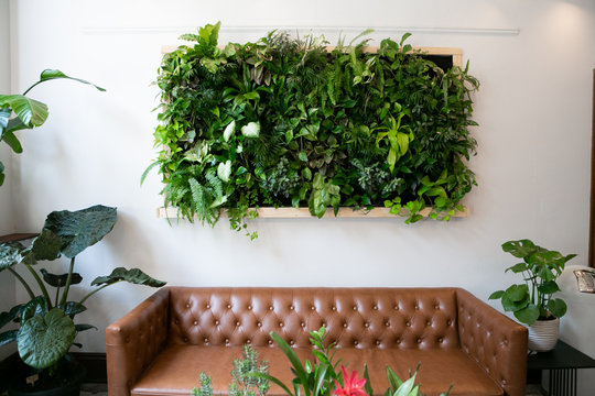 Floating plants on wall over brown leather couch, vertical garden indoors