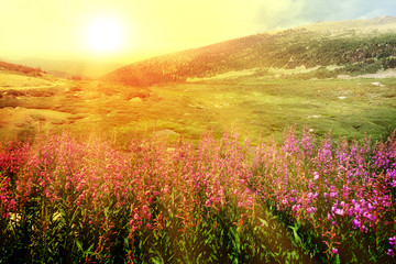 Rays of sunlight shining over a field of red wildflowers in a Colorado spring landscape