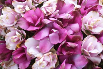 Fond de hotte en verre imprimé Hortensia Flowers Don't Care Where They Grow