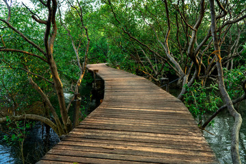 Winding wooden pathway or plank dock in mangrove forest, Natural winding road