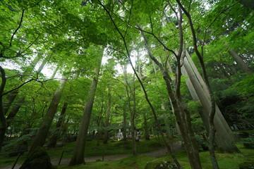 竹林のお庭