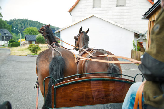 Carriage ride in the village. A horse (Saxon - Thuringian Heavy Warmblood) tears its head high. The coachman can be seen from the side.