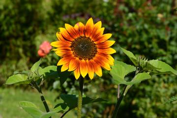Blumen 1133