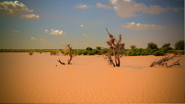 Panoramic landscape view to sahel and oasis Dogon Tabki with flooded river , Dogondoutchi, Niger
