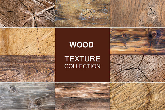 old wood texture of tree stump collection