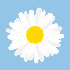 Chamomile flower. Top view. Isolated on blue background. Vector illustration.