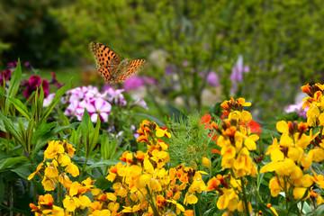 Schmetterling 580
