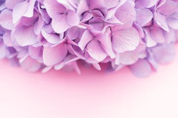 purple pink hydrangea flower head - floral theme backdrops