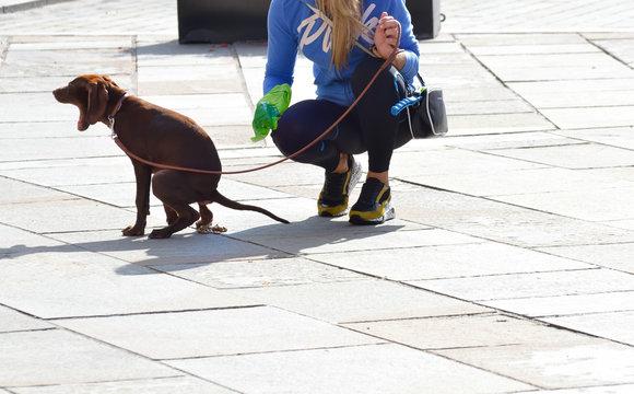 Femme ramassant une crotte de chien