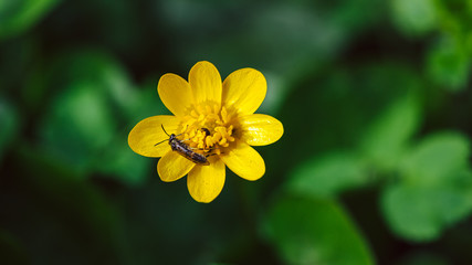 yellow flower with bug on green background