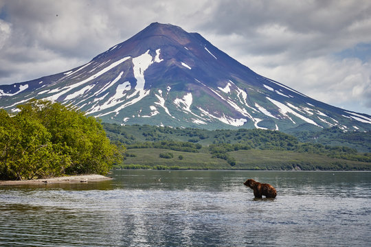 Kamchatka brown bear hunting in Kuril lake near volcano