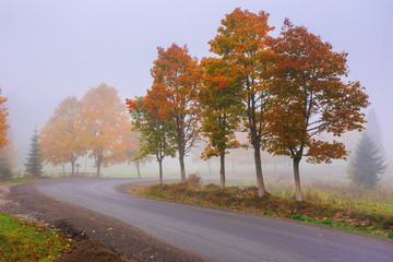road winding through fog in autumn. beautiful fall scenery with trees in colorful foliage. amazing october weather in the morning.