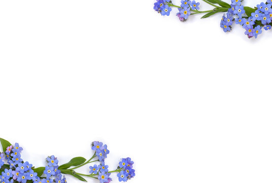 Frame of blue flowers forget-me-nots ( scorpion grasses ) on a white background with space for text. Top view, flat lay