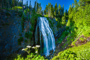 Wall Mural - Narada Falls on a sunny blue sky day Mt. Rainier National Park.