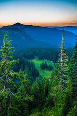 Fototapete - Looking across a valley forest of pine trees and snow covered mountains in the distance during late afternoon in Mt. Rainier National Park.