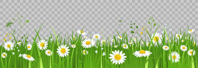 Fototapeta Flowers and green grass. obraz