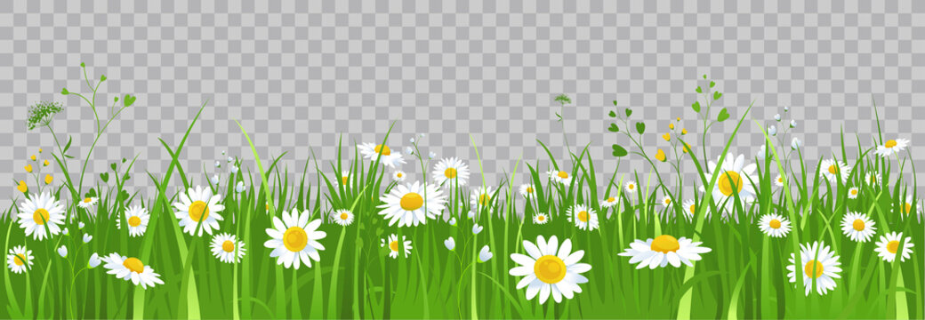 Flowers and green grass.