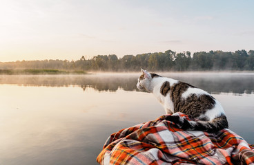 Domestic cat enjoys freedom outside the house on fishing with owners in the early morning in nature. The cat fishing on the inflatable boat on the river. A brave and curious cat in an inflatable kayak