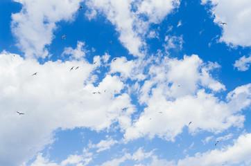 Free birds in the sky. Delightful scenery of the sky.