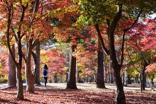 people activity in autumn park