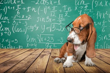 Math dog crazy glasses academic animal blackboard