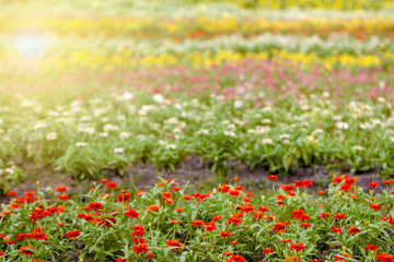 Fotobehang Olijf The flower garden in the colorful garden