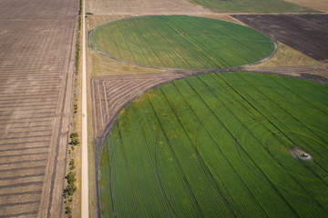 irrigation circles of crops