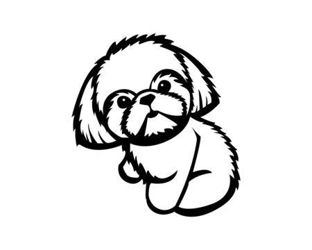 shih tzu vector illustration in black and white