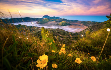 Wall Mural - Yellow flower with Bromo mountain background in Argowulan view point