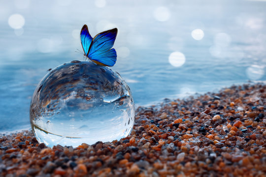 Butterfly on a glass ball on the beach refecting the lake and sky