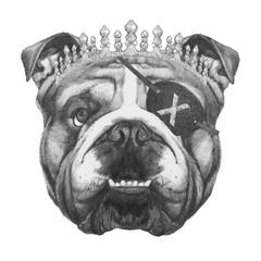 Portrait of English Bulldog with diadem and eye patch. Hand-drawn illustration.