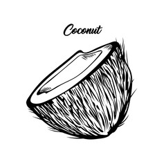 Coconut half black and white illustration. Fresh exotic food, tropical fruit with lettering. Delicious vegan dessert, natural palm tree fetus ink pen drawing. Banner, greeting card design element
