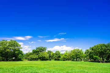 Tuinposter Donkerblauw 青空と緑の公園