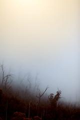 Foto auf Leinwand Fantasie-Landschaft Regenwald Wald mit Nebel in Australien