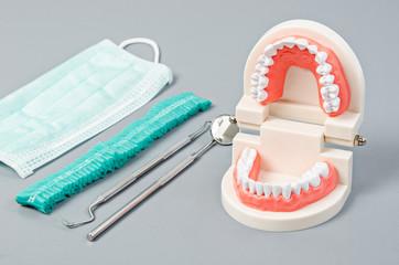 Model teeth with dental tools.
