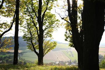 Fototapete - Weinberge bei Castell in Unterfranken
