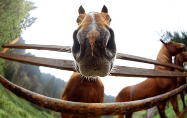 close up horse head portrait. cute funny brown horse peeping through the fence