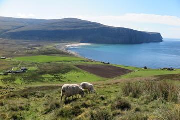 Bucht von Rackwick auf Hoy, Orkney Inseln