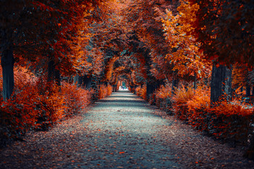 Photo sur Aluminium Campagne autumn alley .tree alley in the park in autumn time