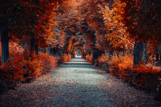 autumn alley .tree alley in the park in autumn time