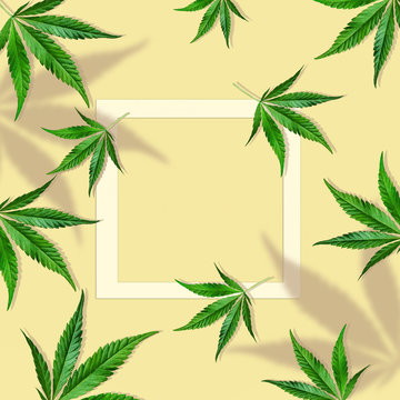Composition of cannabis leaves on a light yellow background with ribbon copy space. Minimal CBD OIL concept. Flat lay