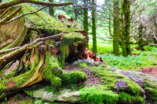 Asheville NC Mountains Woods Green Moss on Trees Stumps