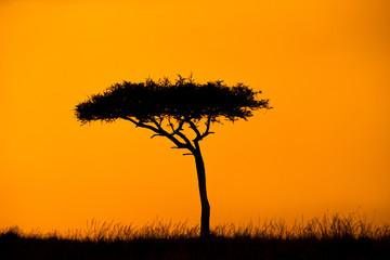 Wall Mural - Acacia Treee Silhouette With Orange Sky