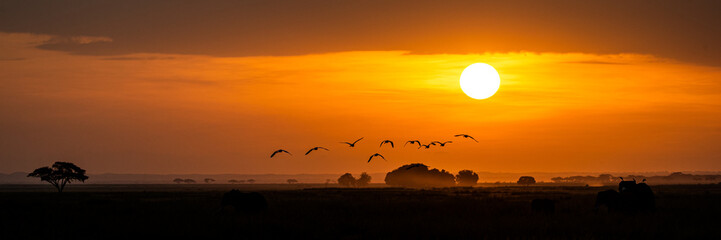 In de dag Afrika Golden African Sunset With Flock of Birds