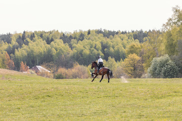 Foto op Aluminium Paardrijden portrait of horse gallop during eventing competition