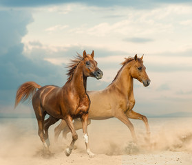 Beautiful chestnut horses