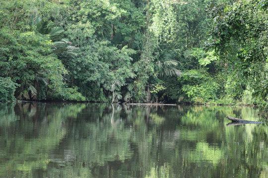 jungle reflection on still water
