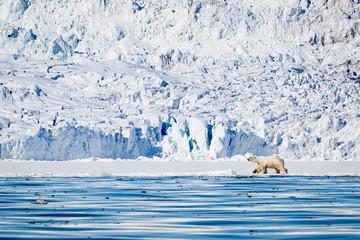 Deurstickers Ijsbeer Polar bear in front of glacier