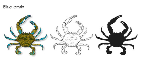 Crab vector by hand drawing.crab silhouette on white background.Blue Crabs art highly detailed in line art style.Animal pictures for coloring