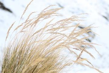 Vida vegetal entre la nieve